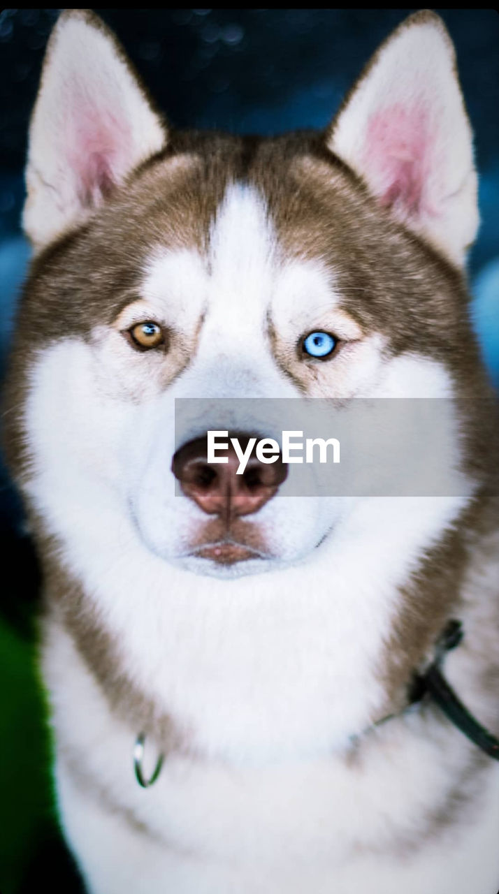 CLOSE-UP PORTRAIT OF DOG WITH EYES