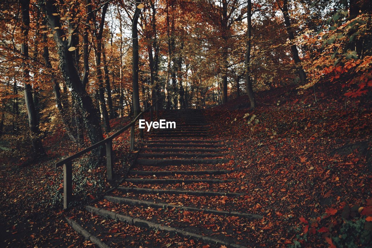 Steps In Forest During Autumn