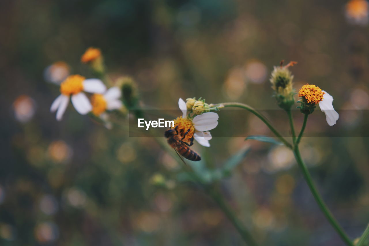 flower, flowering plant, fragility, vulnerability, plant, freshness, beauty in nature, growth, close-up, petal, focus on foreground, flower head, yellow, nature, inflorescence, day, selective focus, no people, plant stem, outdoors, pollen, pollination, butterfly - insect