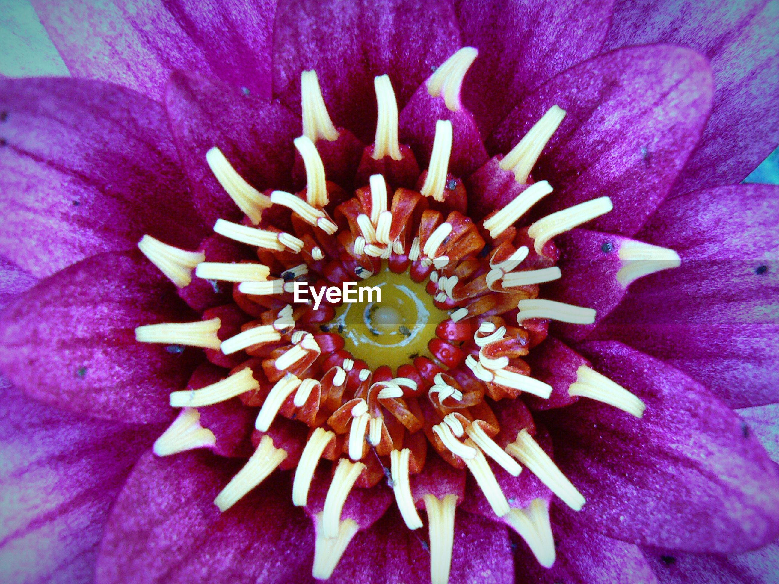 Close-up of fresh purple flower blooming in garden