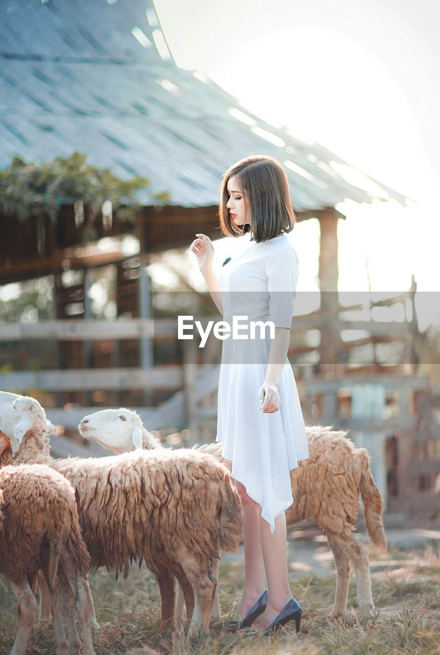 Side View Of Young Woman Standing By Sheep On Field Against Sky