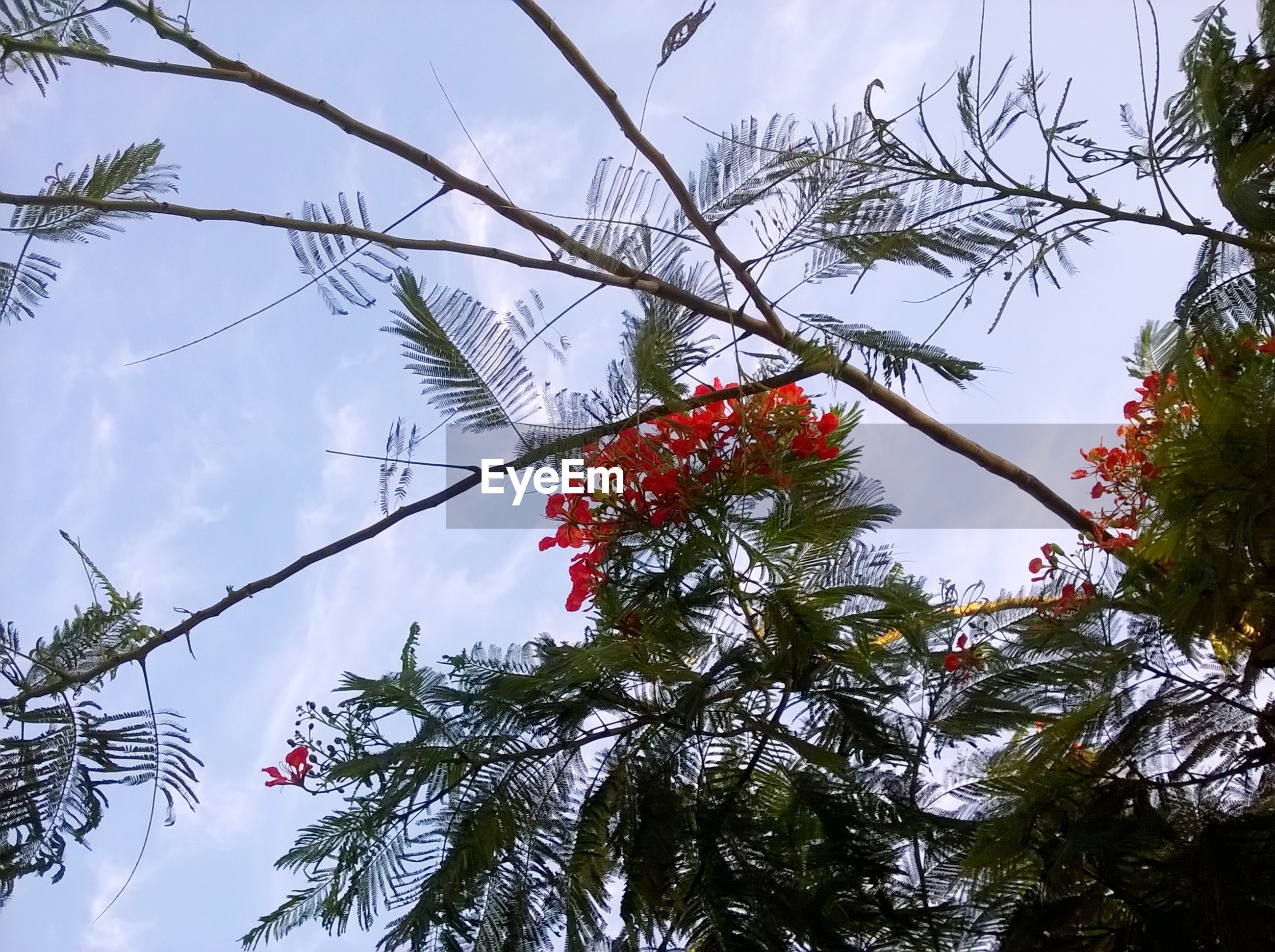 tree, growth, red, low angle view, branch, nature, fruit, beauty in nature, no people, sky, rowanberry, day, berry fruit, outdoors, freshness, close-up