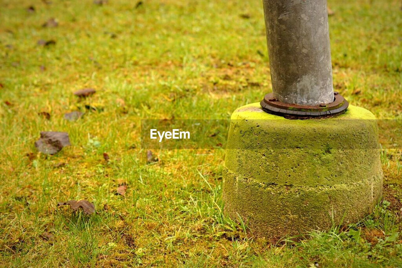 plant, grass, no people, green color, day, metal, land, field, nature, outdoors, focus on foreground, close-up, growth, old, selective focus, moss, rusty, single object, post, solid