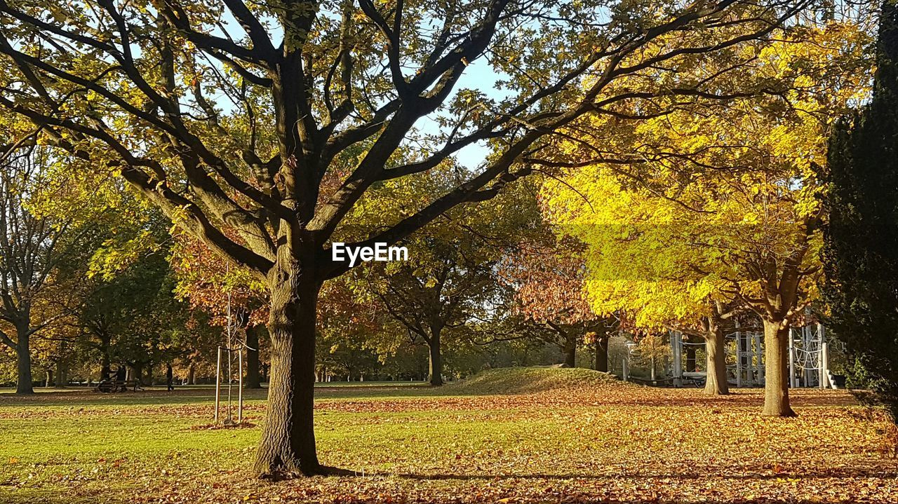 tree, autumn, leaf, tree trunk, nature, tranquility, beauty in nature, change, outdoors, scenics, growth, branch, tranquil scene, yellow, day, landscape, no people, deciduous tree, bare tree, grass, sky