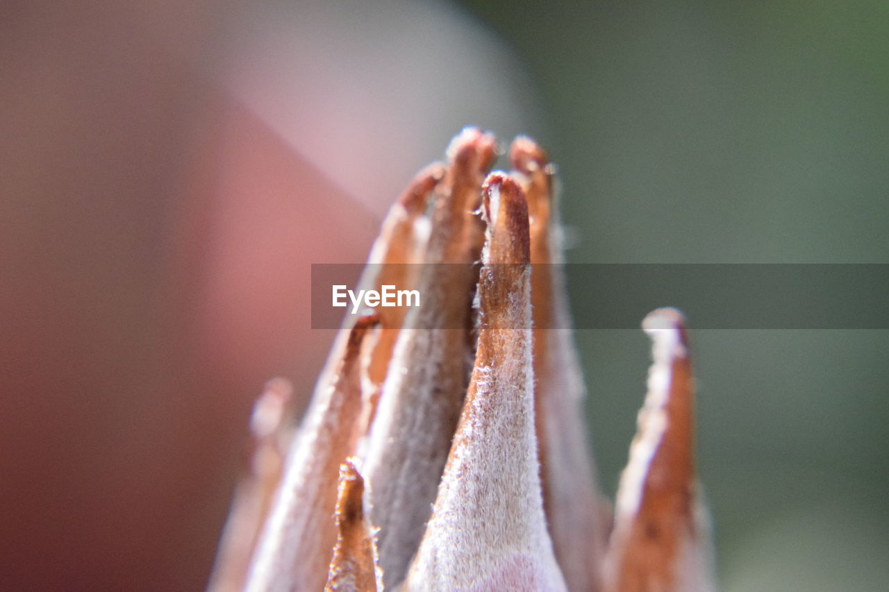 close-up, focus on foreground, no people, plant, nature, growth, selective focus, day, beauty in nature, vulnerability, outdoors, fragility, tranquility, sunlight, sharp, macro, wood - material, flower, pattern, succulent plant