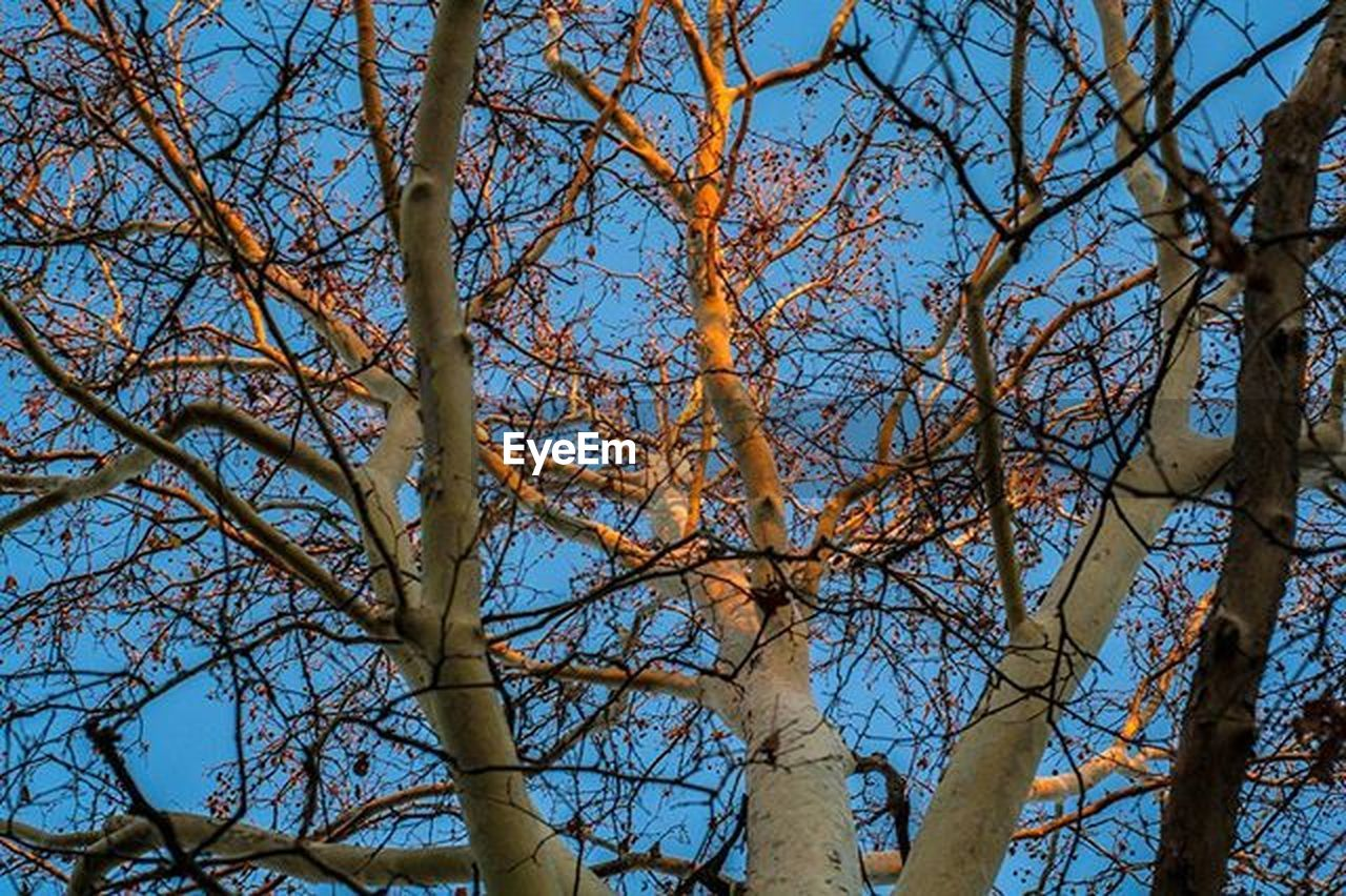 tree, branch, low angle view, nature, bare tree, beauty in nature, day, no people, outdoors, sky, tranquility, growth, clear sky