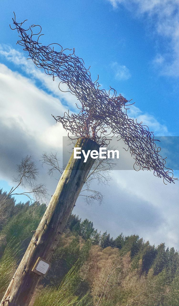 sky, tree, no people, day, outdoors, cloud - sky, nature, growth, beauty in nature