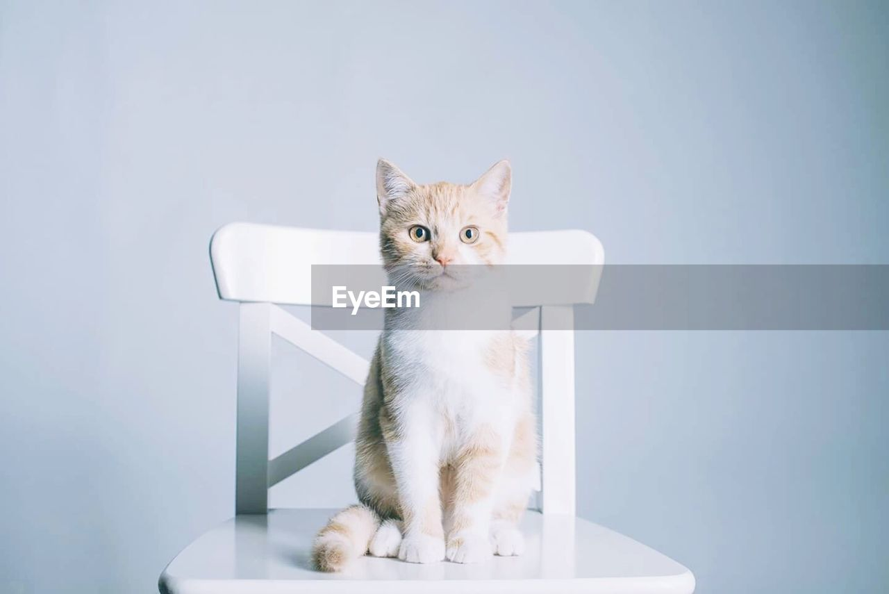 Portrait of cat sitting on chair against wall
