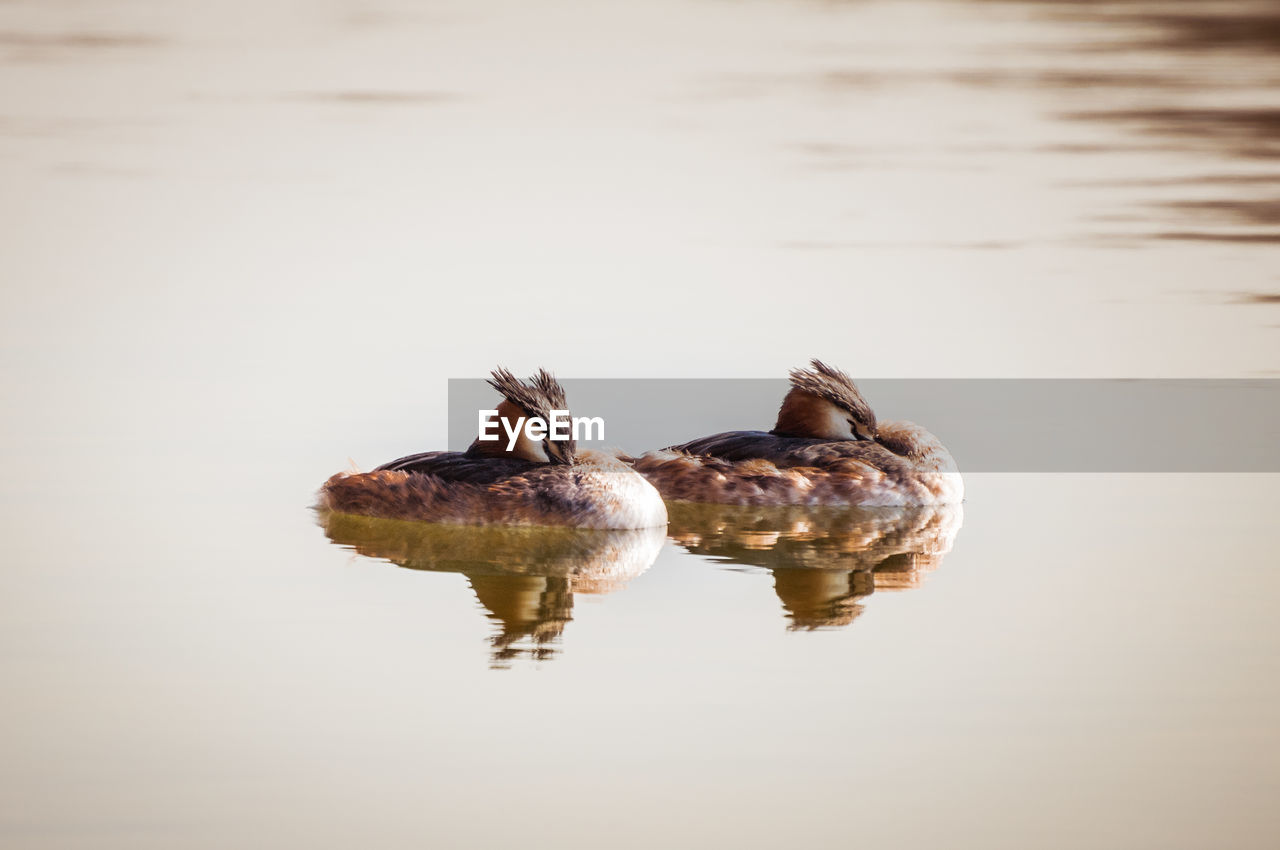 water, animal wildlife, animal themes, animal, reflection, waterfront, animals in the wild, one animal, lake, no people, nature, vertebrate, swimming, shell, day, turtle, close-up, marine