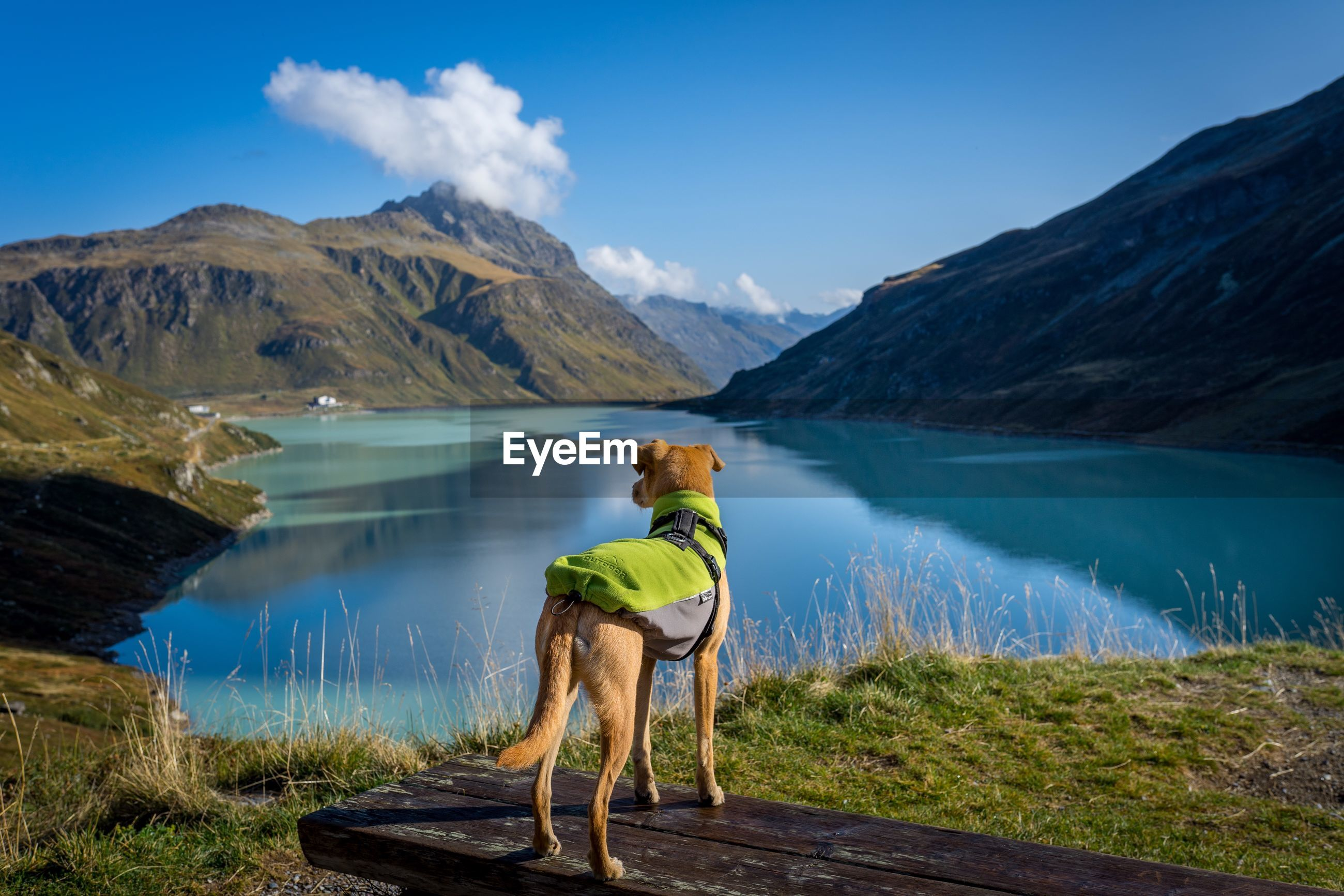 Dog standing by lake against mountains and sky