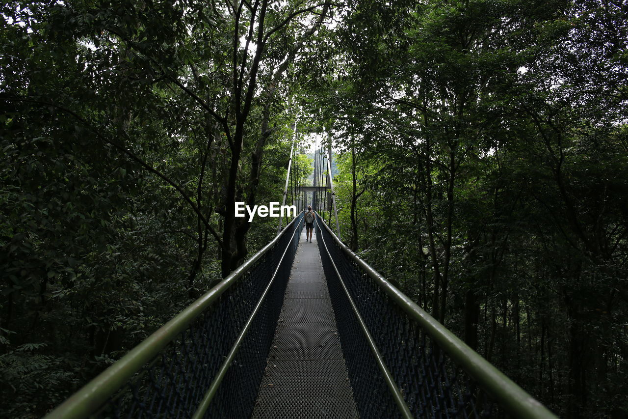 tree, the way forward, railing, bridge - man made structure, forest, footbridge, growth, outdoors, nature, day, no people