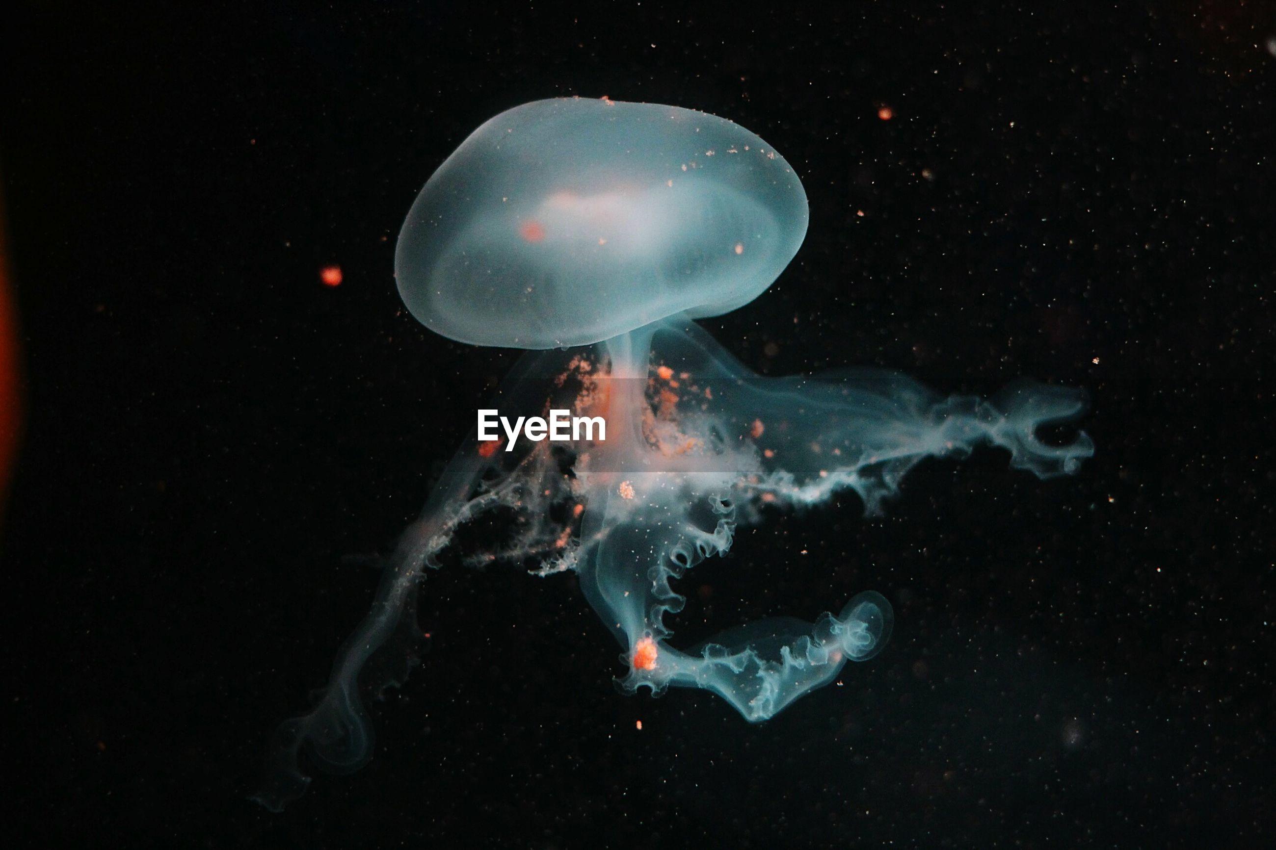 Jellyfish swimming underwater at aquadom