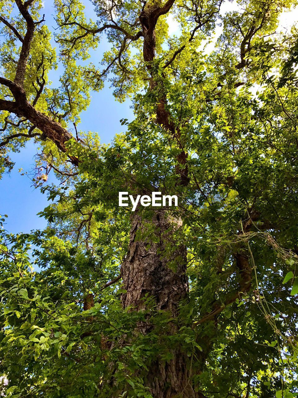 tree, nature, growth, low angle view, branch, beauty in nature, forest, green color, day, no people, leaf, outdoors, freshness