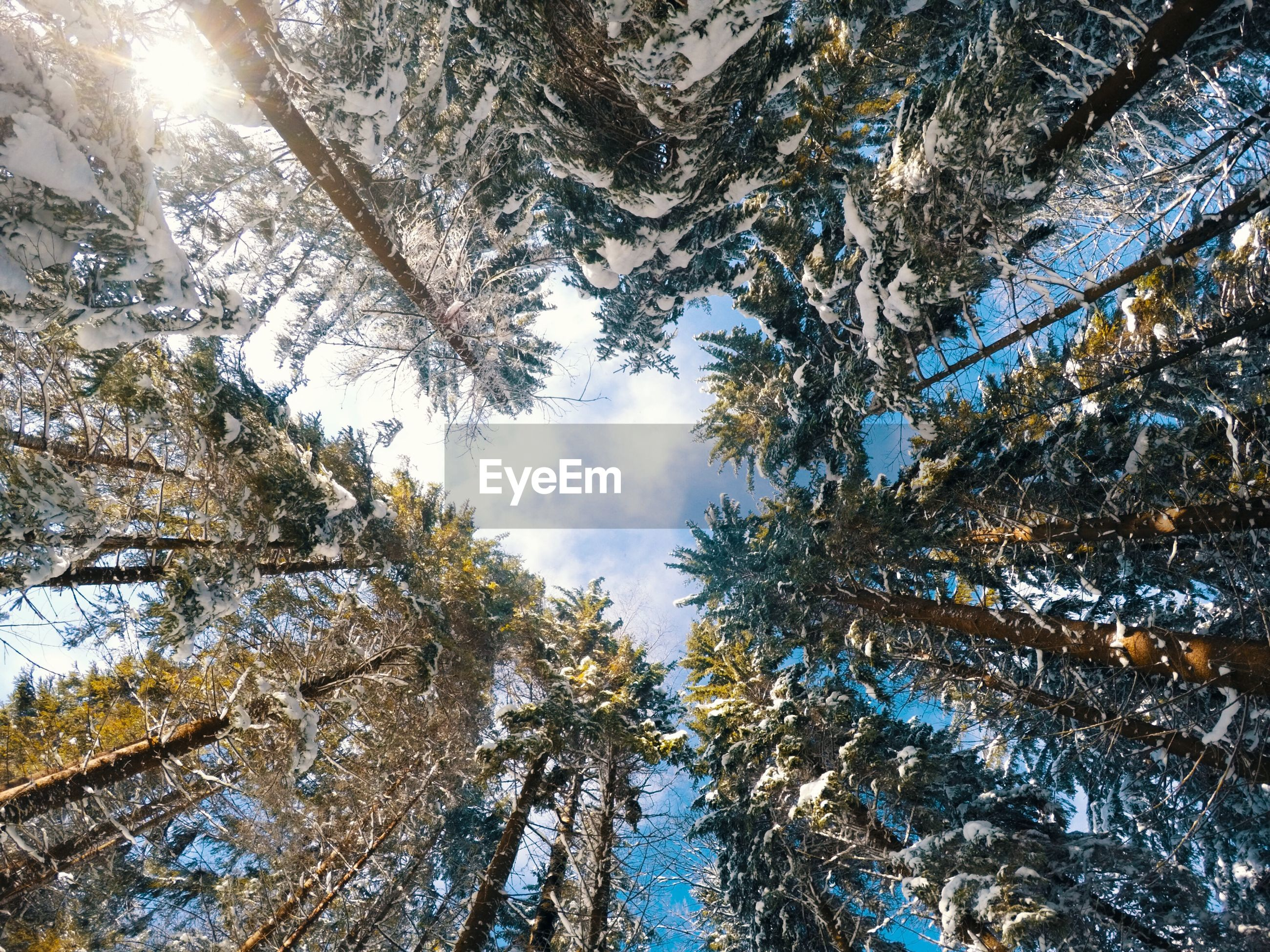 Directly below shot of snow covered trees in forest against sky