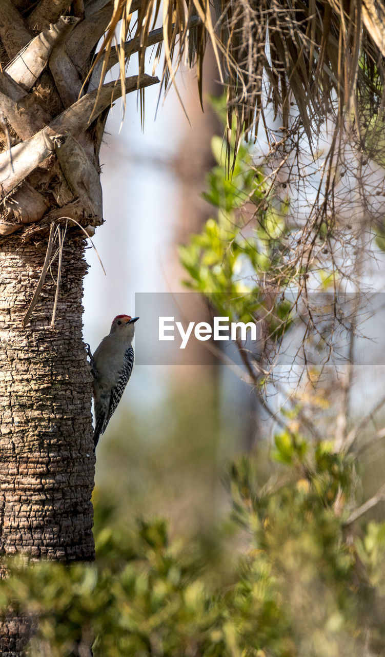 bird, one animal, animal themes, animals in the wild, animal wildlife, perching, focus on foreground, day, no people, tree, outdoors, nature, woodpecker, branch, beauty in nature, close-up