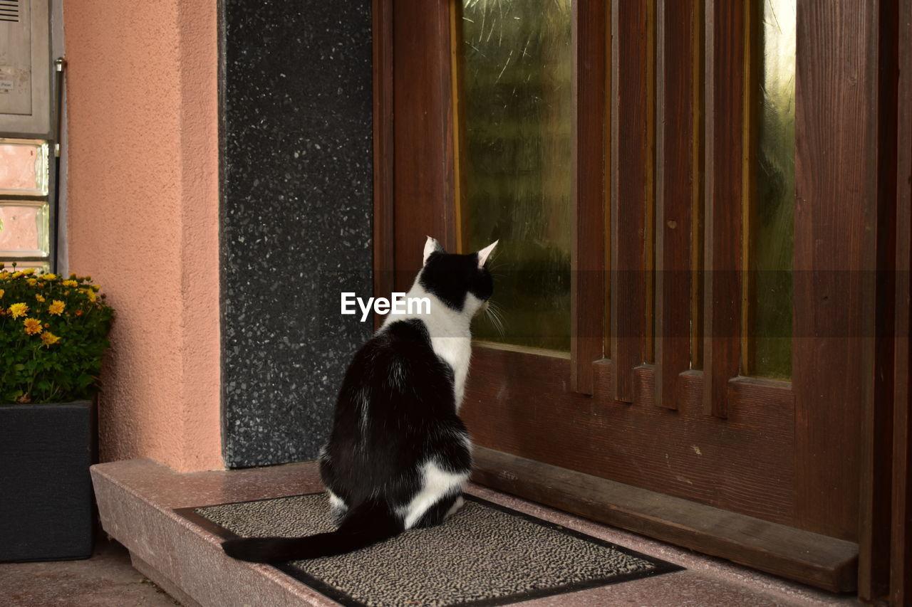 Cat Sitting On Doorway