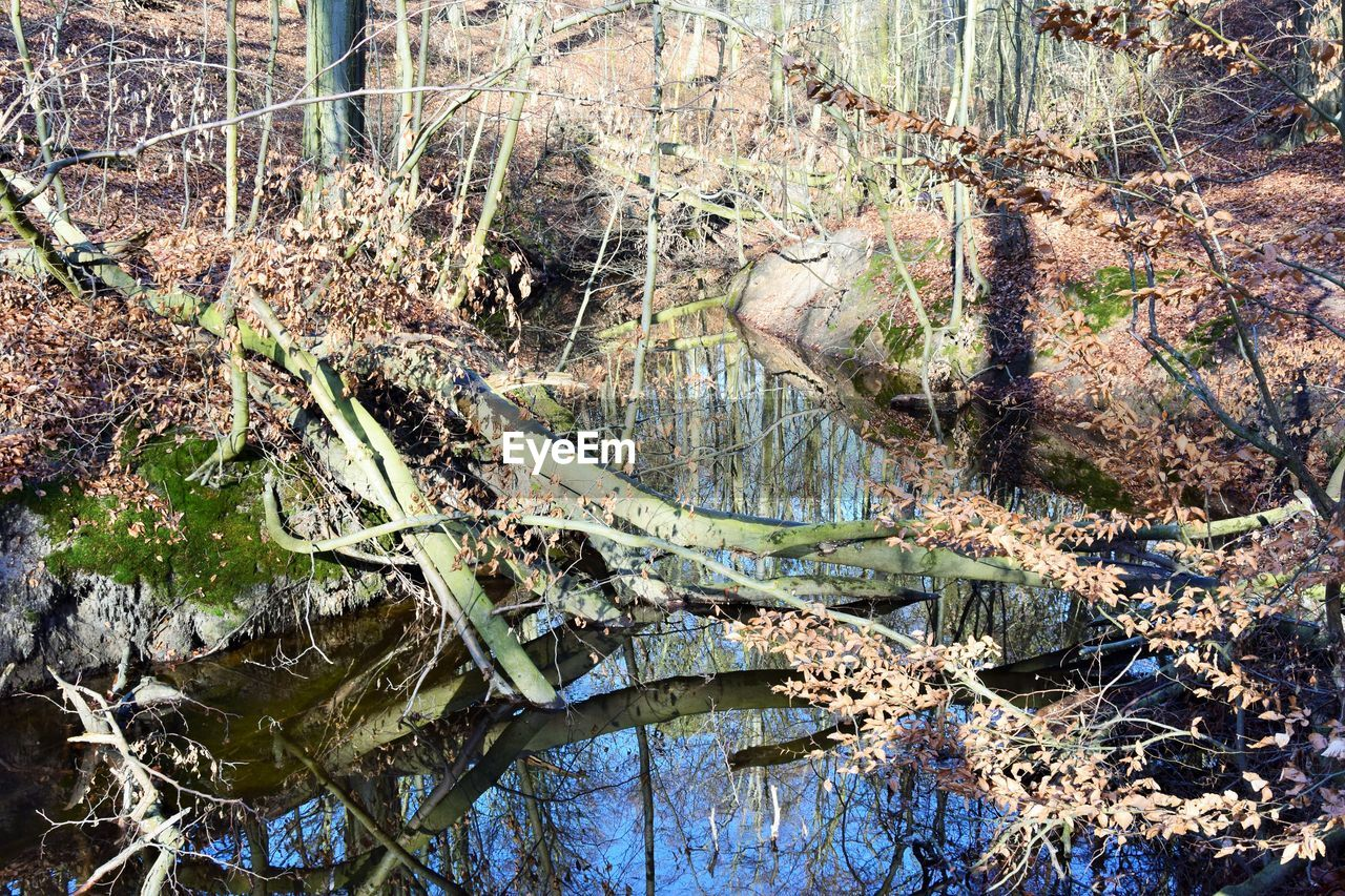 water, tree, plant, tranquility, nature, day, no people, land, forest, lake, reflection, high angle view, growth, beauty in nature, outdoors, branch, tranquil scene, fallen tree, dead plant