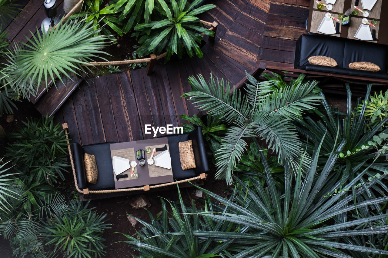 green color, plant, potted plant, high angle view, no people, growth, chair, table, day, nature, outdoors, tree, close-up