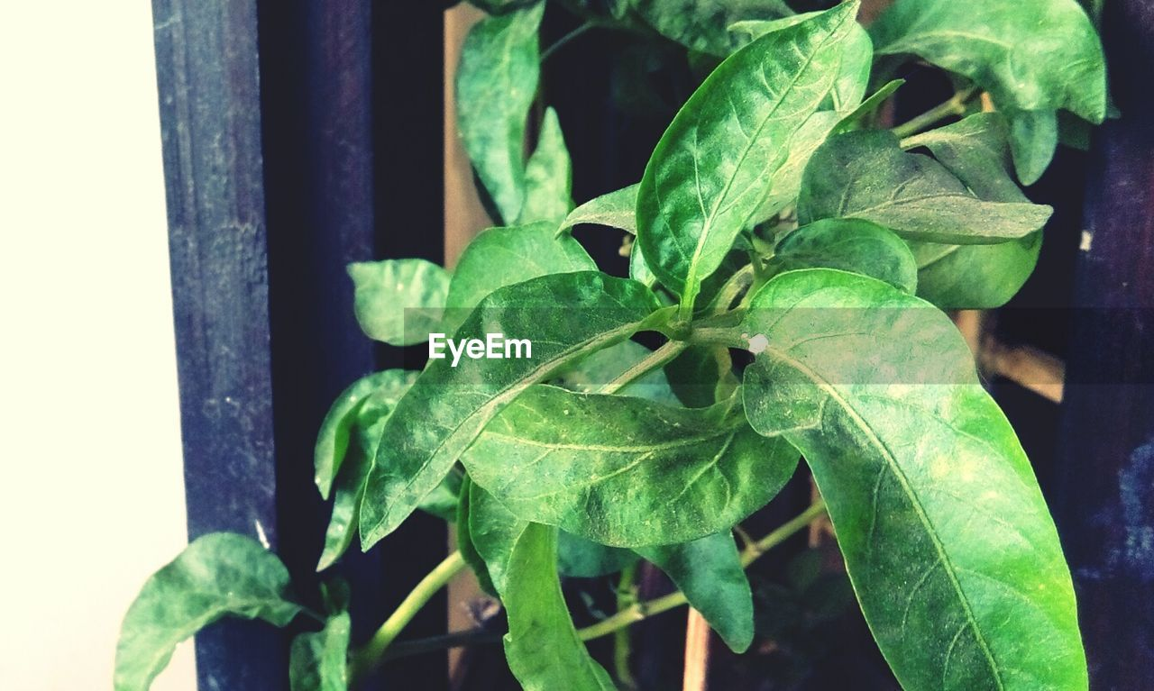 leaf, growth, green color, plant, close-up, no people, nature, outdoors, day, freshness, beauty in nature, fragility, animal themes