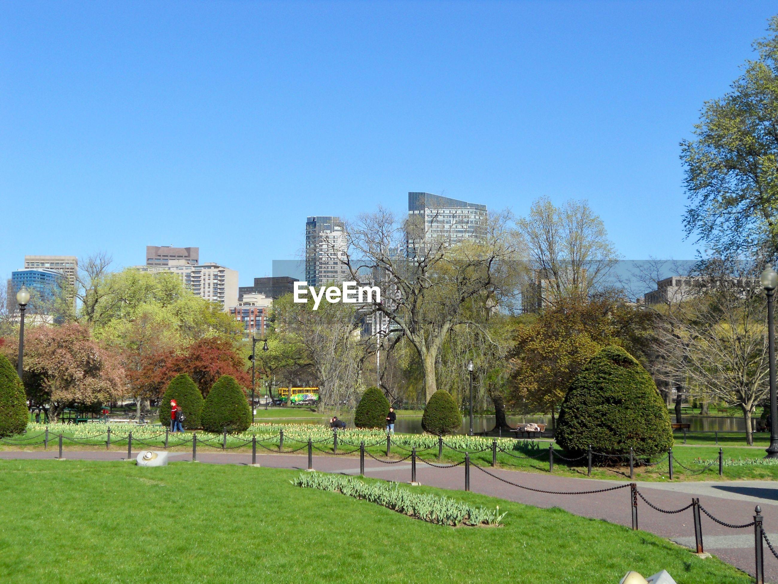 TREES IN PARK AGAINST BUILDINGS IN CITY