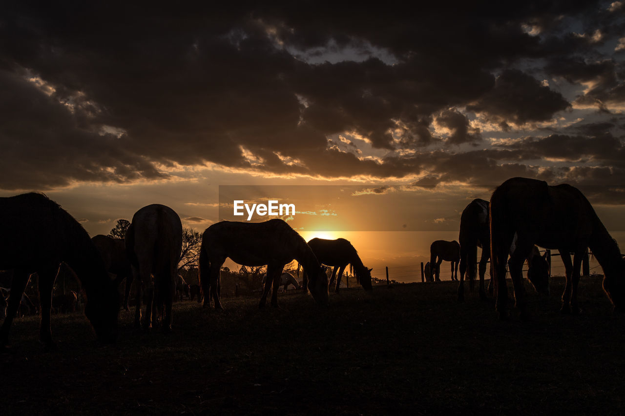 Horses Grazing On Landscape At Sunset