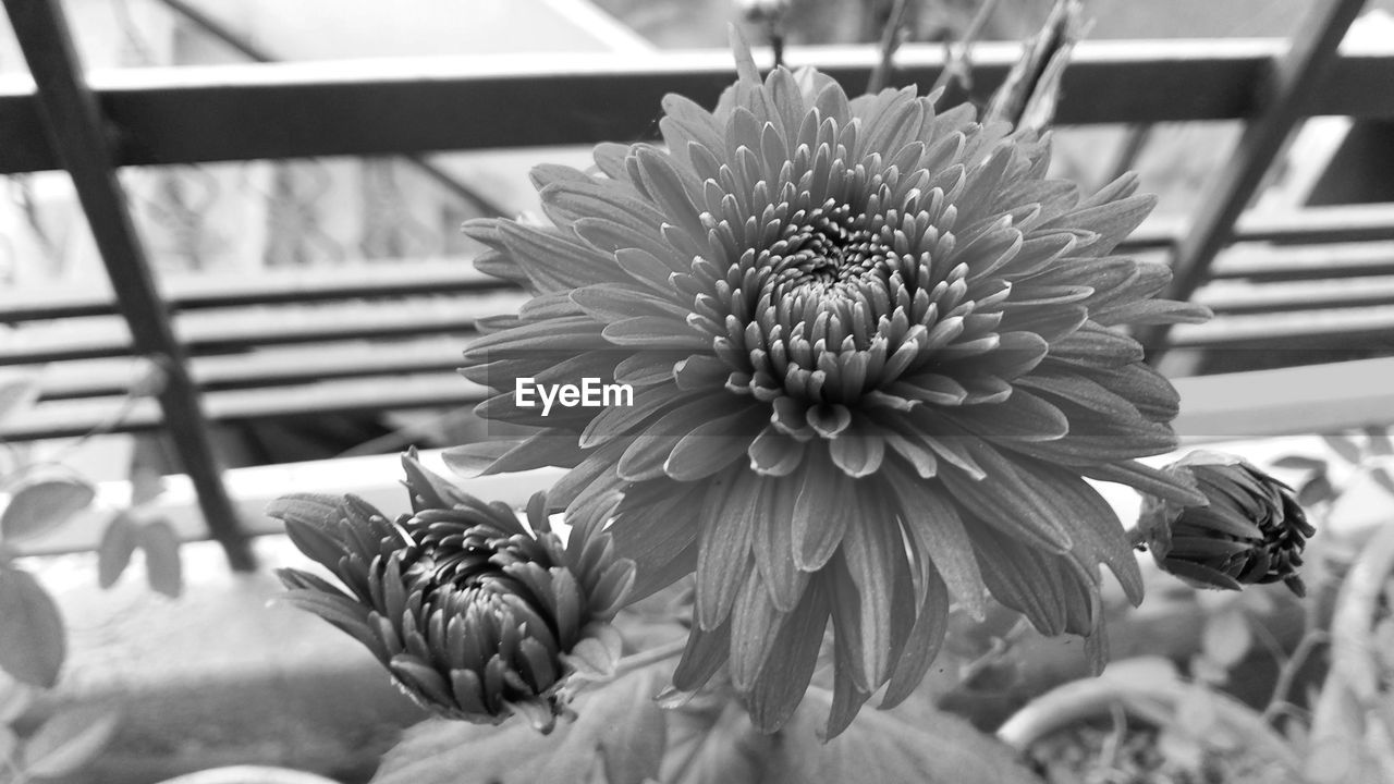 flower, flowering plant, plant, vulnerability, fragility, beauty in nature, freshness, growth, petal, close-up, flower head, inflorescence, nature, no people, focus on foreground, day, selective focus, outdoors, leaf, plant part, pollen