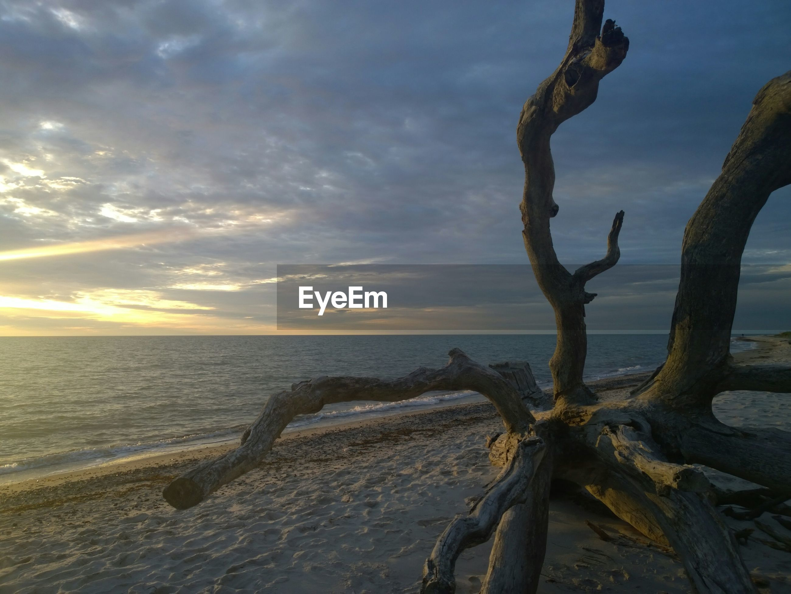 Root on beach