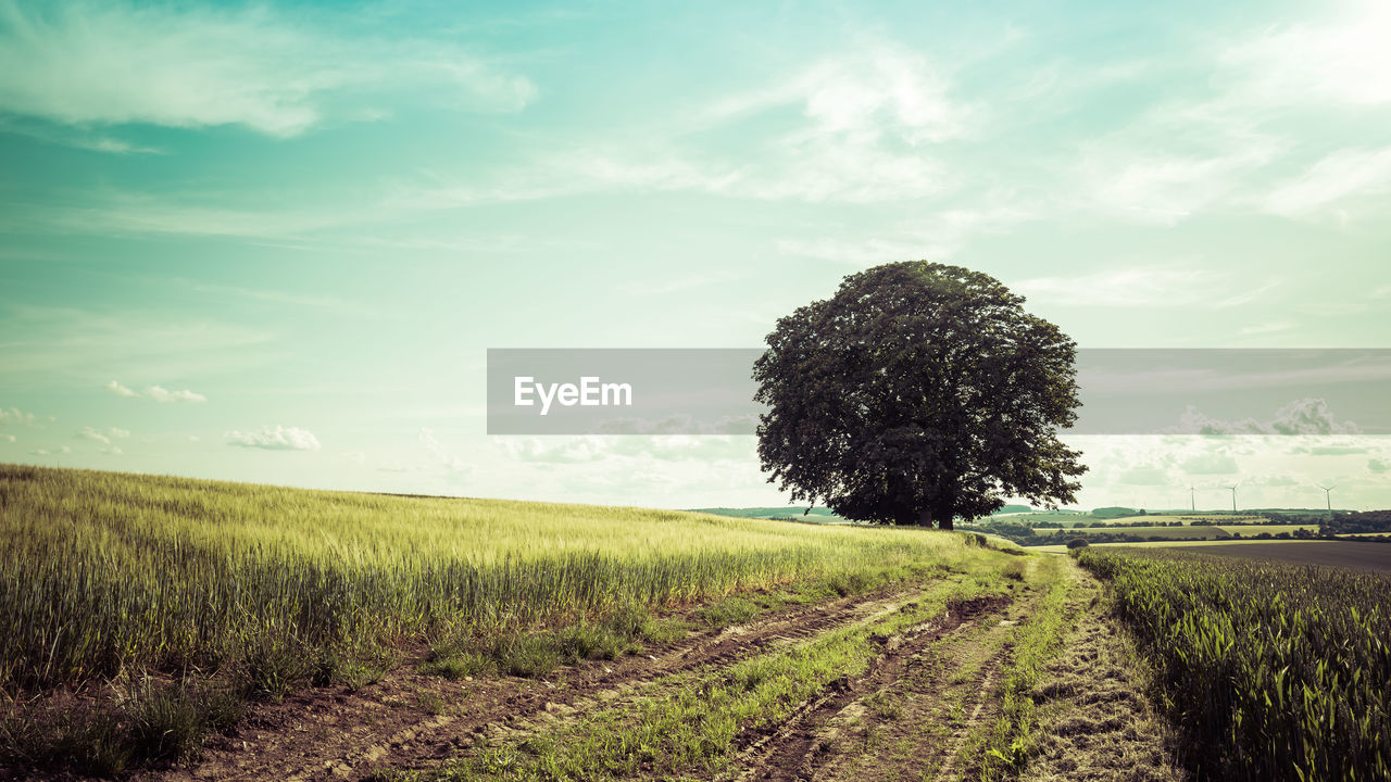 sky, plant, field, land, landscape, cloud - sky, growth, environment, nature, grass, beauty in nature, tranquility, tranquil scene, agriculture, scenics - nature, tree, rural scene, green color, no people, day, outdoors