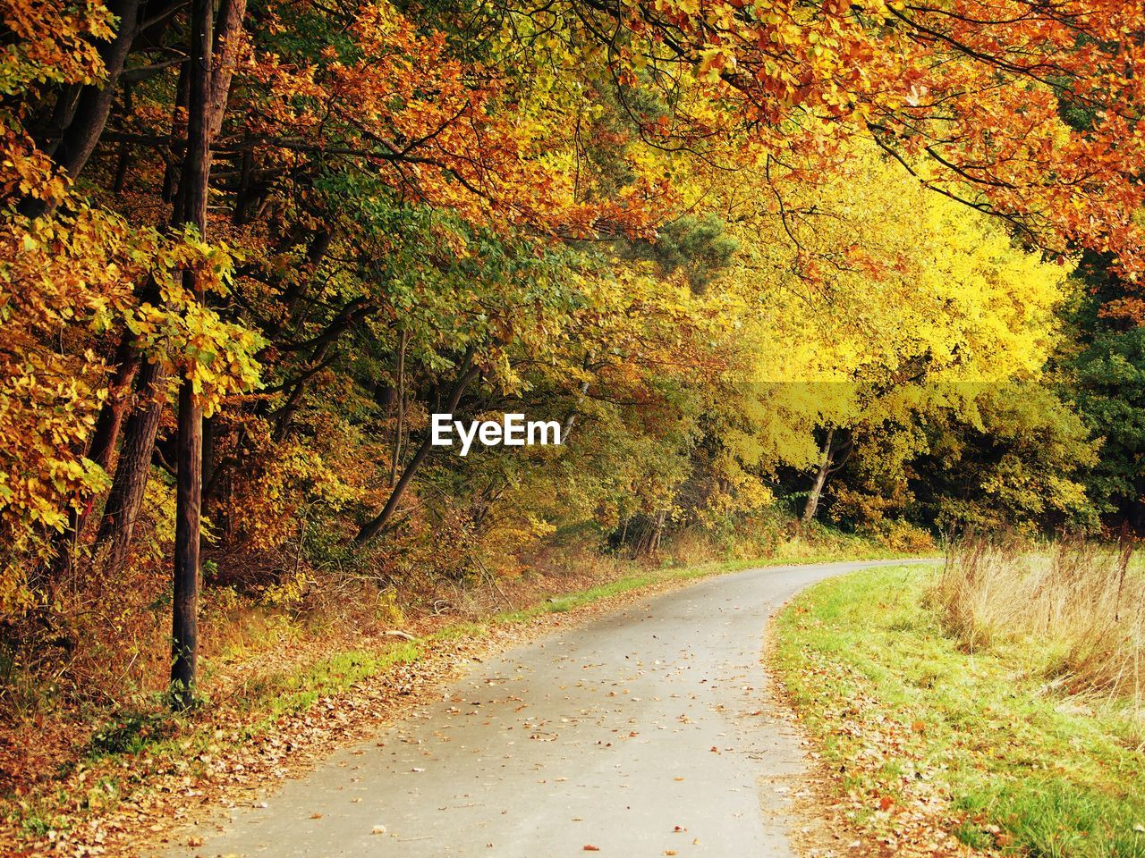 autumn, tree, nature, beauty in nature, scenics, change, tranquility, growth, tranquil scene, the way forward, leaf, no people, landscape, road, day, outdoors, forest