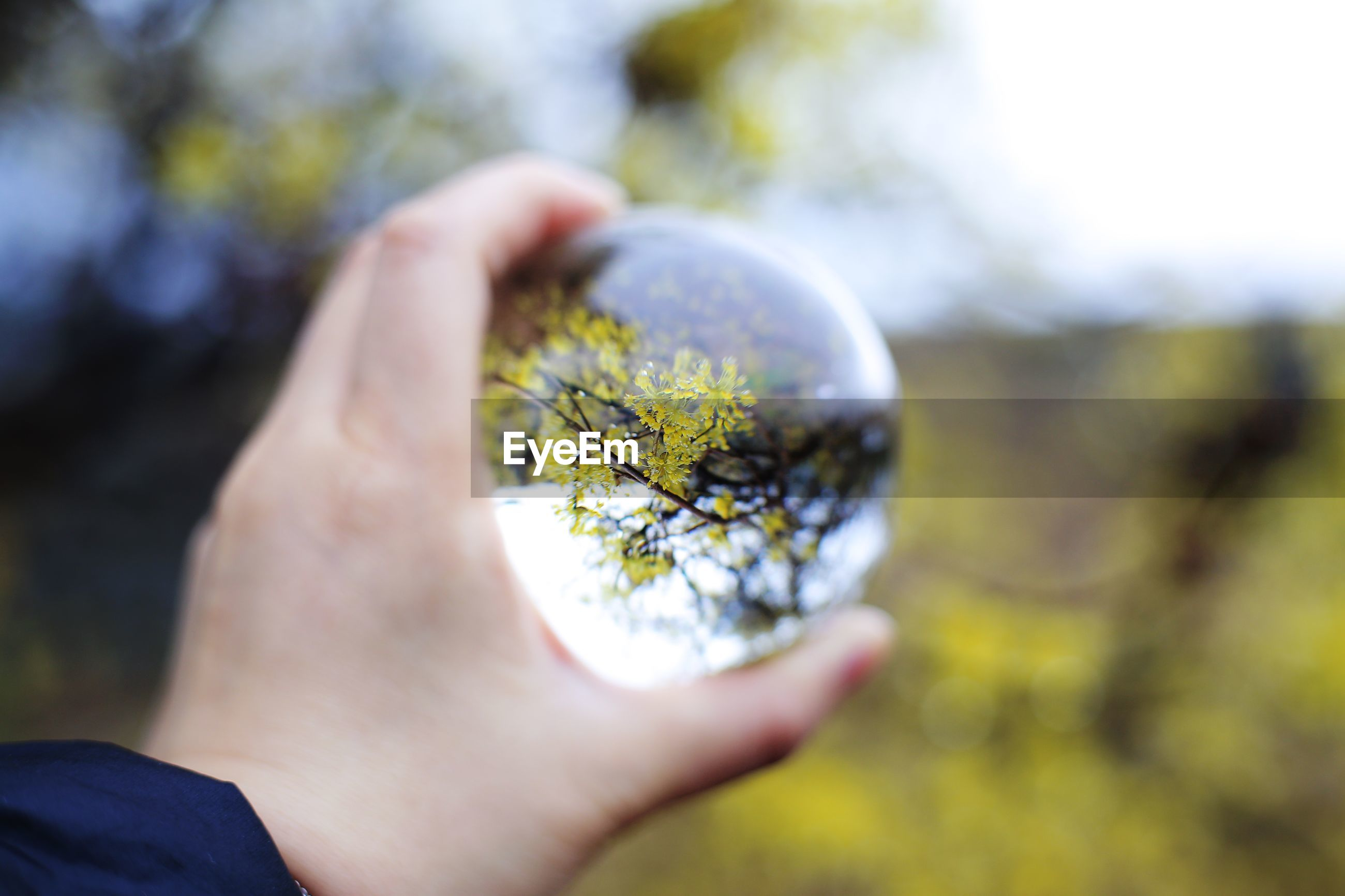 Cropped hand of woman holding crystal ball with tree reflection