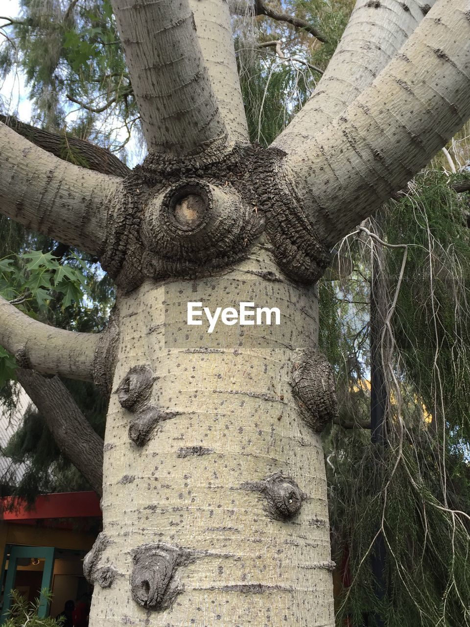 tree trunk, tree, day, no people, nature, growth, low angle view, wood - material, outdoors, branch, close-up, animal themes