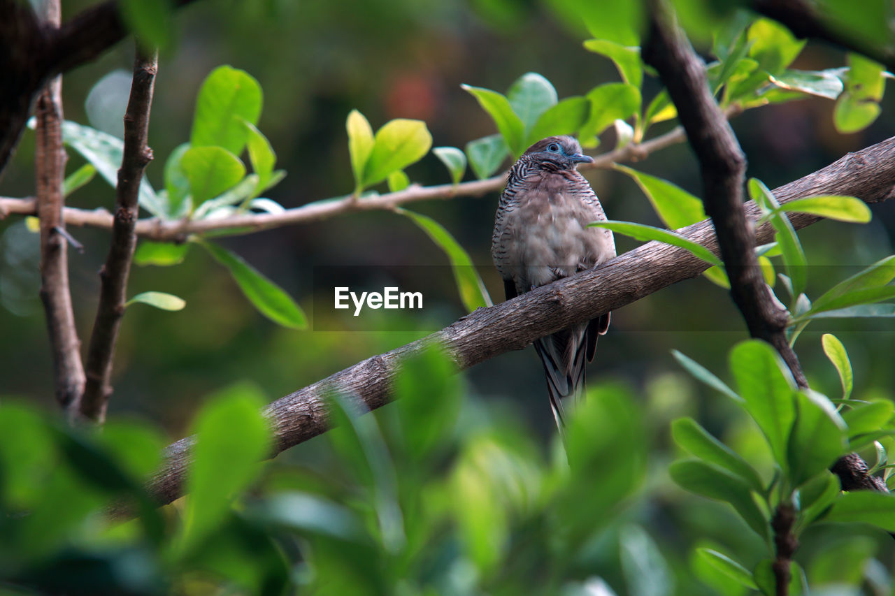 animal wildlife, animal, animal themes, animals in the wild, vertebrate, one animal, bird, plant, perching, tree, plant part, branch, green color, leaf, nature, no people, day, selective focus, growth, beauty in nature, outdoors