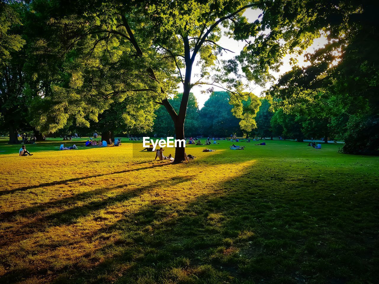 People at park during sunset