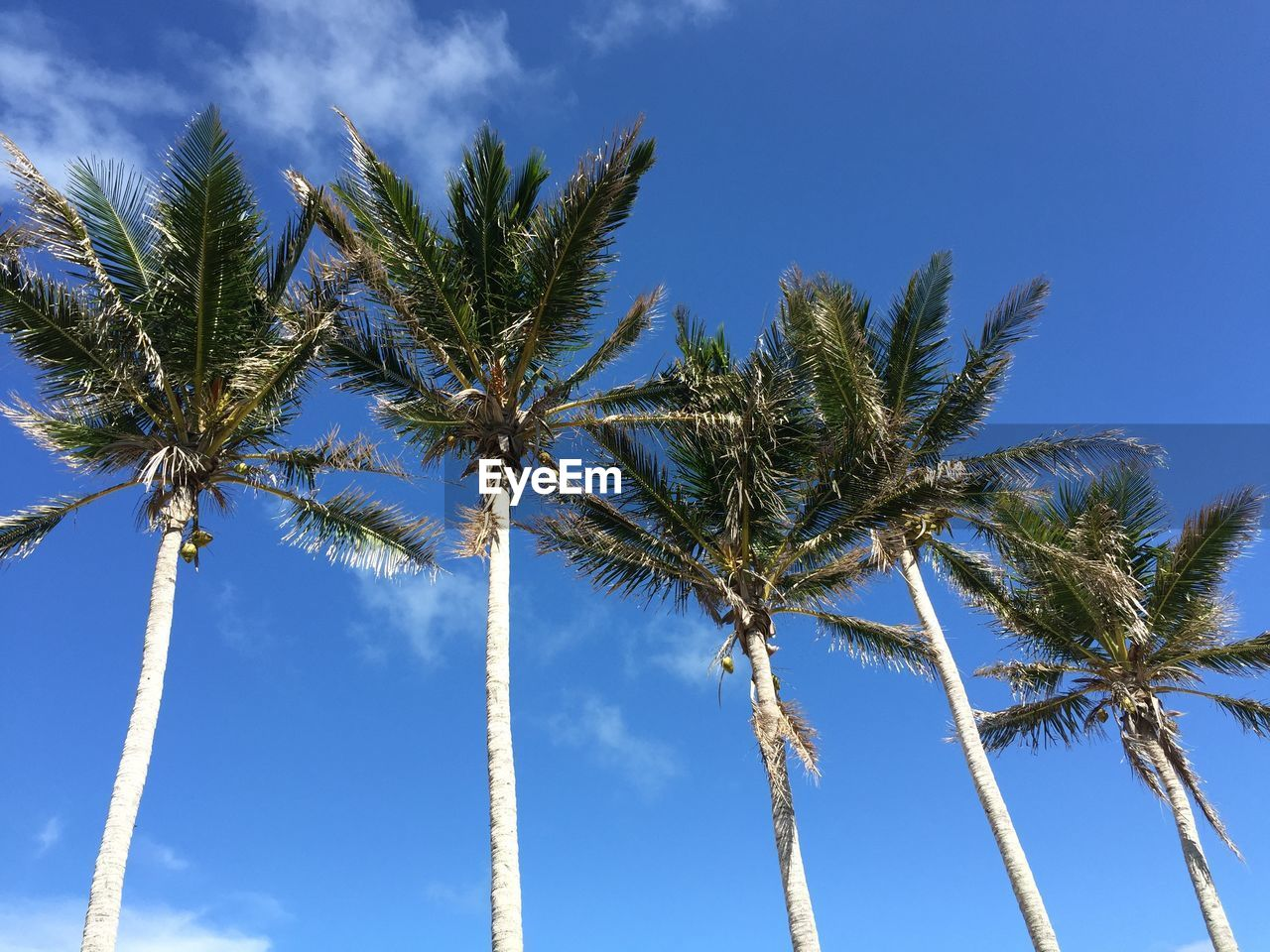 sky, tree, palm tree, plant, tropical climate, growth, low angle view, cloud - sky, nature, blue, day, tree trunk, no people, trunk, beauty in nature, tall - high, coconut palm tree, tranquility, sunlight, tropical tree, outdoors, palm leaf, treelined