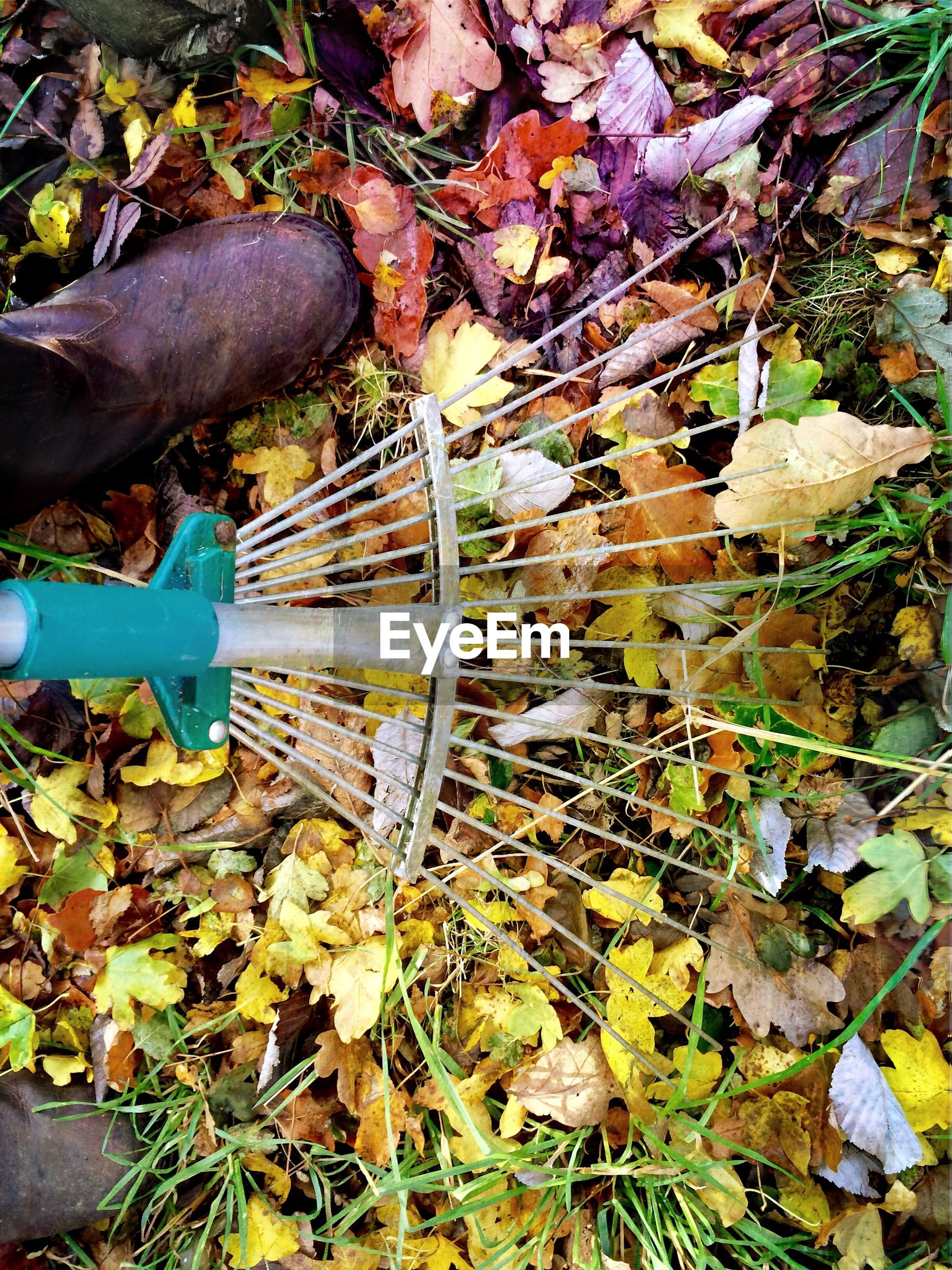 High angle view of person racking autumn leaves in lawn