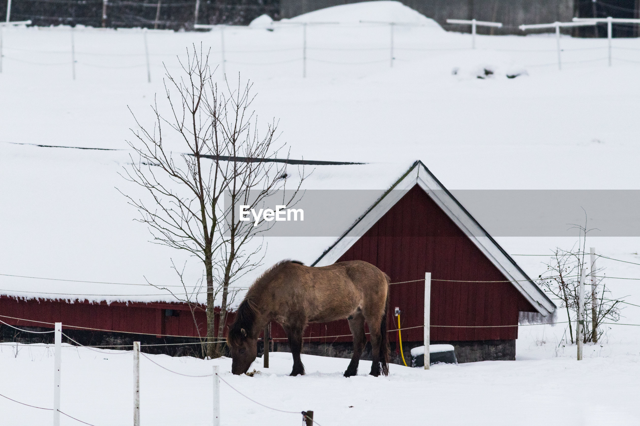 View of a horse on snow covered field
