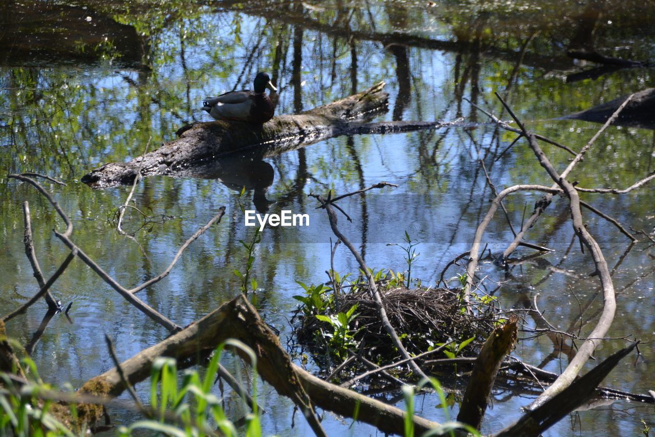 tree, animal, animal themes, animal wildlife, plant, animals in the wild, one animal, branch, water, vertebrate, nature, no people, day, lake, mammal, outdoors, bird, forest, low angle view