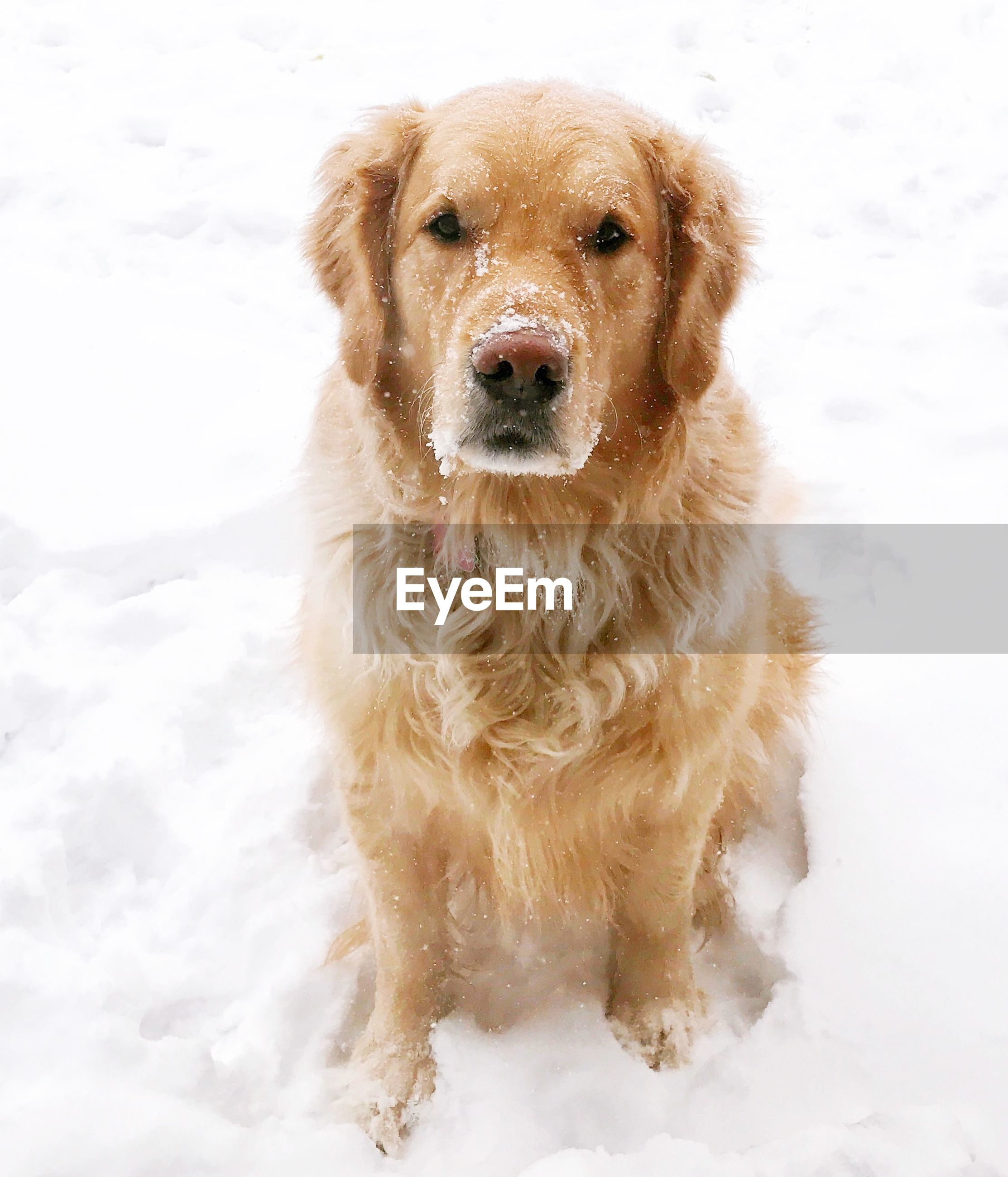 Portrait of dog on snowfield