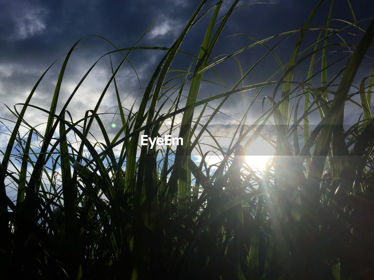 growth, nature, plant, beauty in nature, sunlight, field, outdoors, no people, sun, day, tranquility, sky, low angle view, close-up, freshness