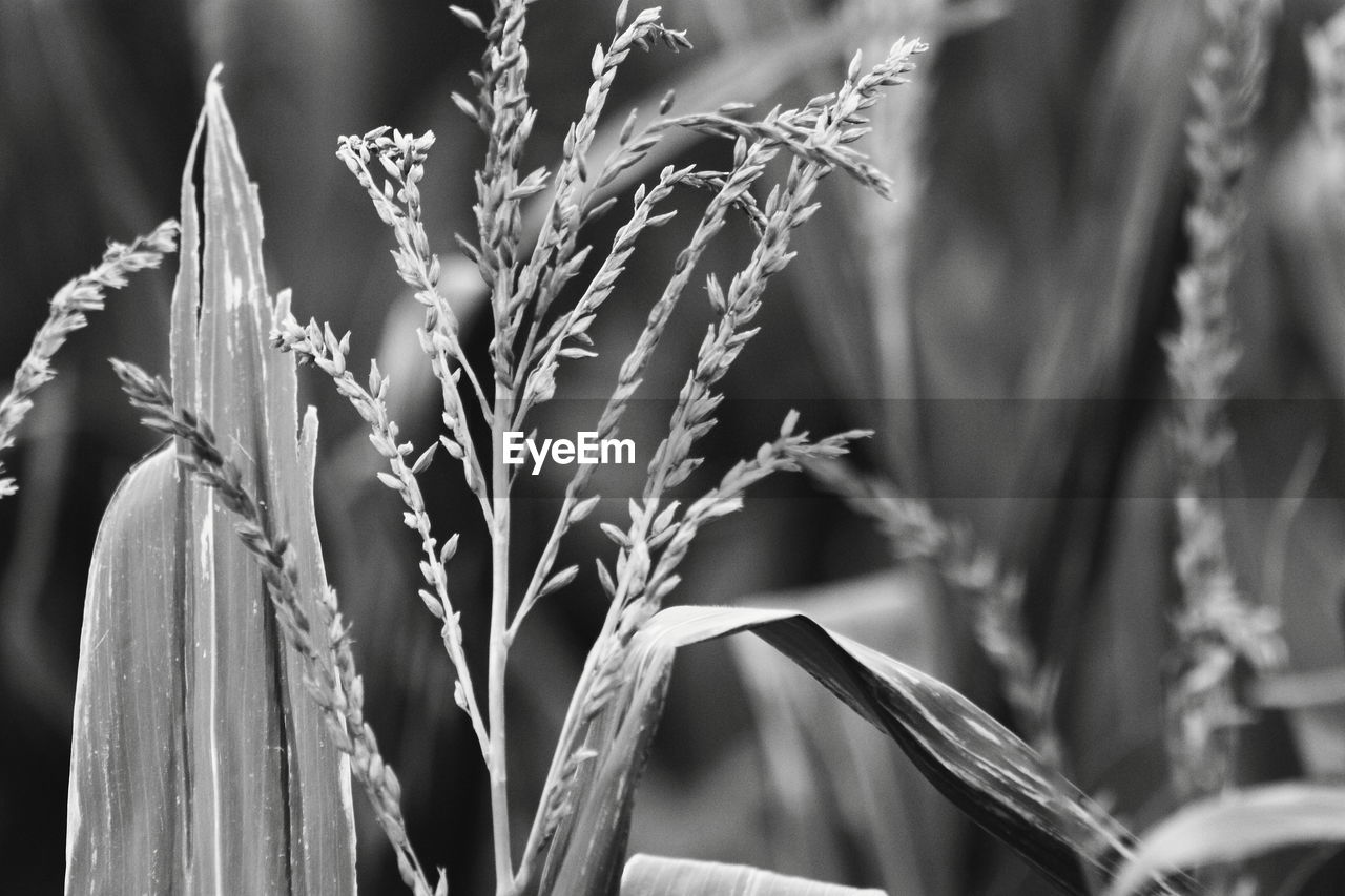 growth, nature, plant, no people, focus on foreground, day, outdoors, agriculture, close-up, cereal plant, beauty in nature, wheat, food, freshness