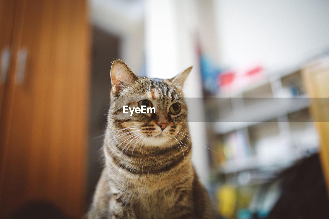 View Of Cat Looking Away
