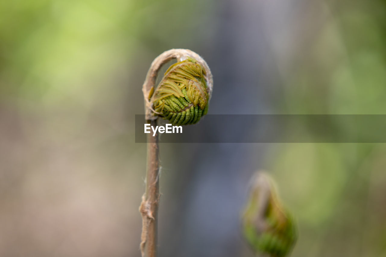 plant, close-up, focus on foreground, growth, beauty in nature, plant stem, no people, nature, bud, fragility, flower, vulnerability, green color, selective focus, day, beginnings, new life, spiral, flowering plant, outdoors