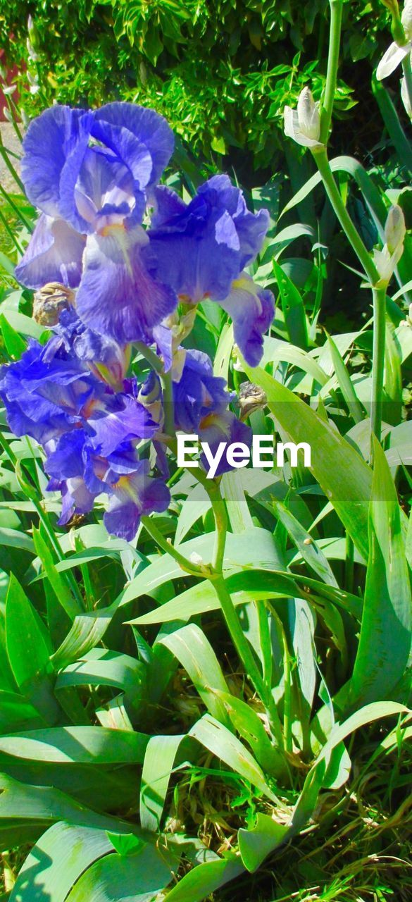 growth, flower, purple, plant, petal, freshness, nature, beauty in nature, outdoors, day, no people, leaf, fragility, close-up, flower head