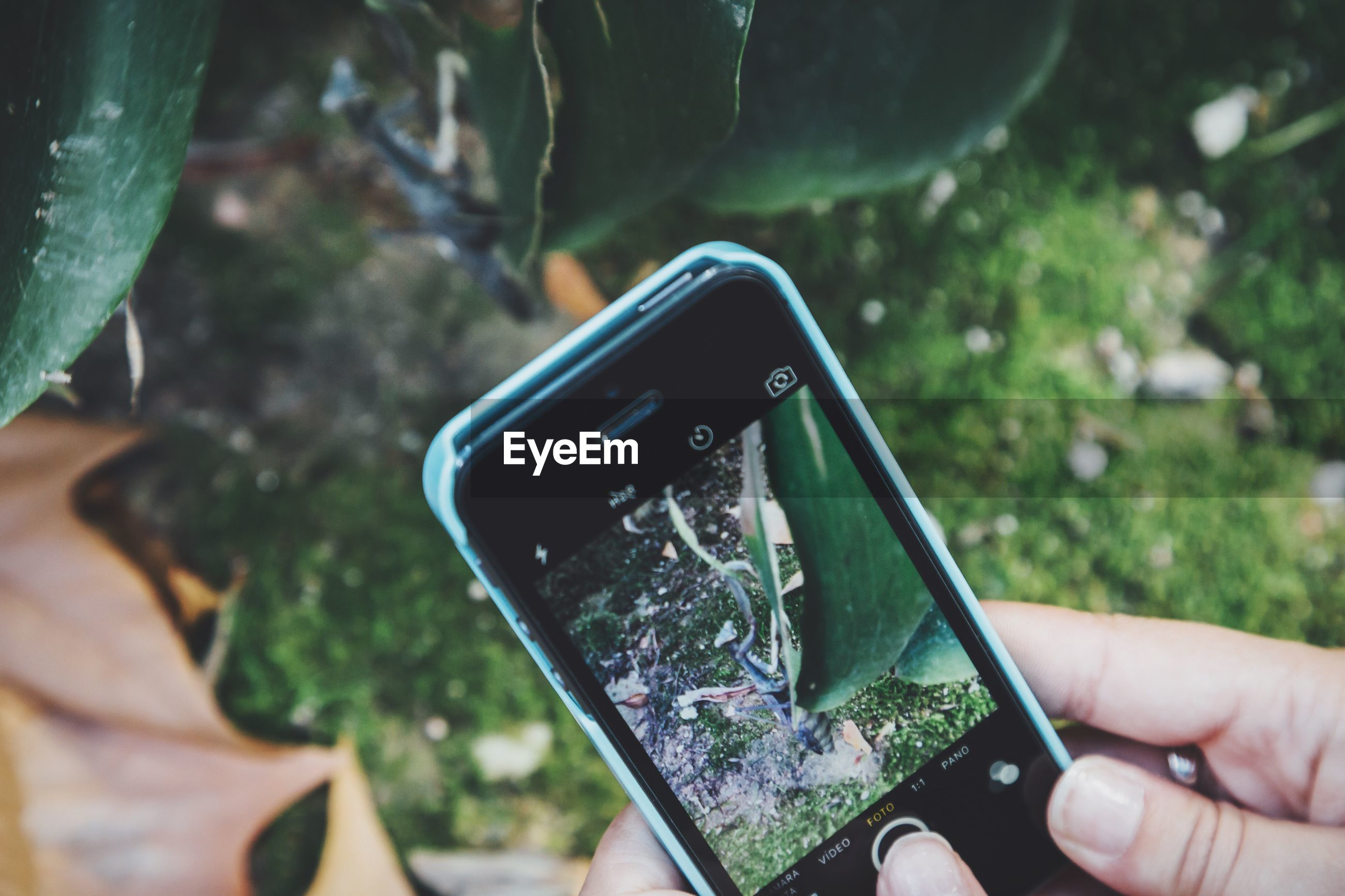 Cropped image of hands photographing insect on plant through smart phone