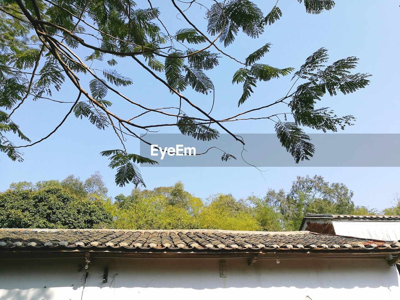 tree, roof, tiled roof, architecture, day, no people, growth, outdoors, sky, built structure, nature, building exterior, beauty in nature
