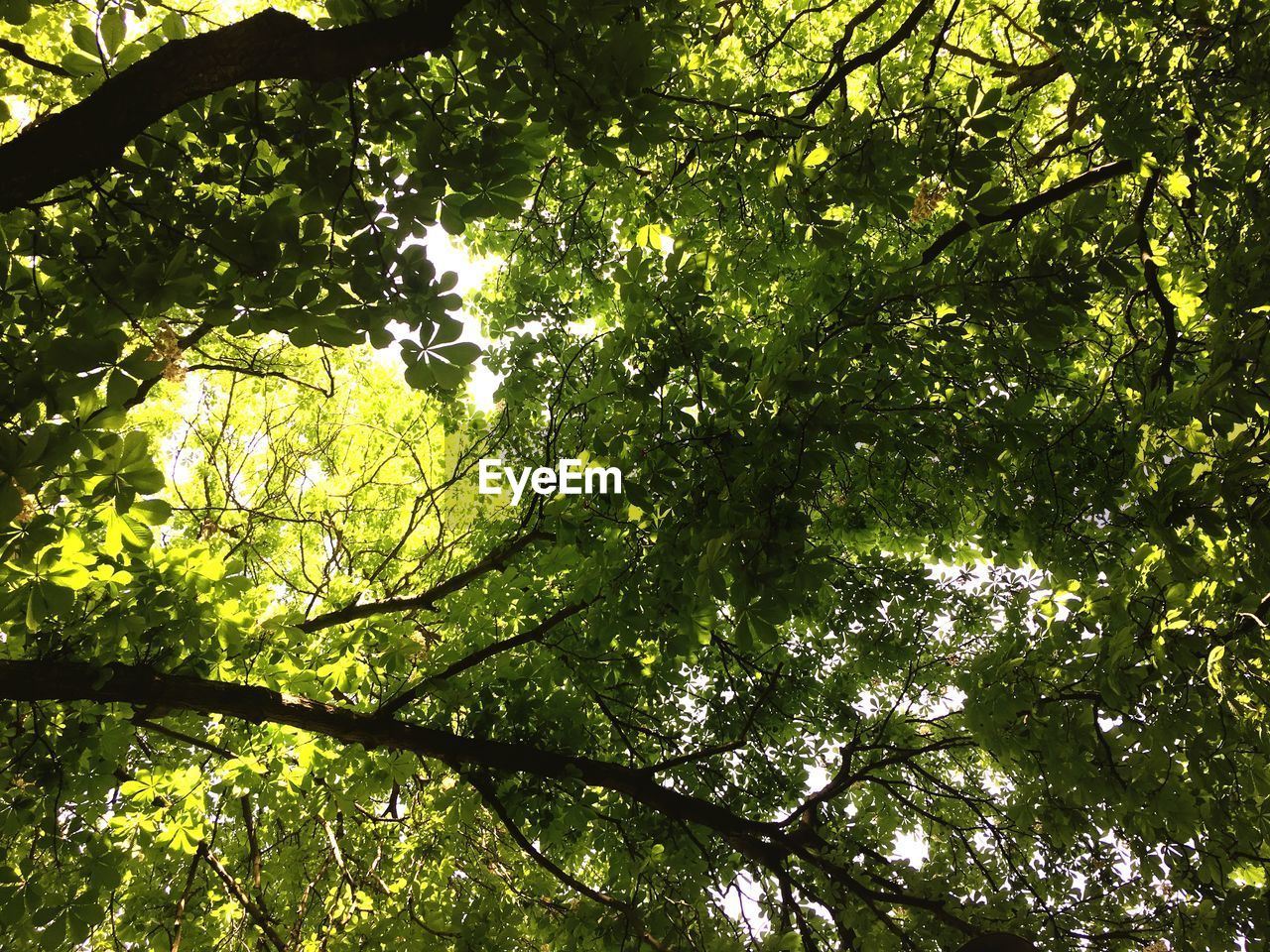 tree, plant, growth, branch, beauty in nature, low angle view, nature, green color, sunlight, day, no people, leaf, plant part, tranquility, outdoors, forest, sky, backgrounds, full frame, tree canopy, directly below