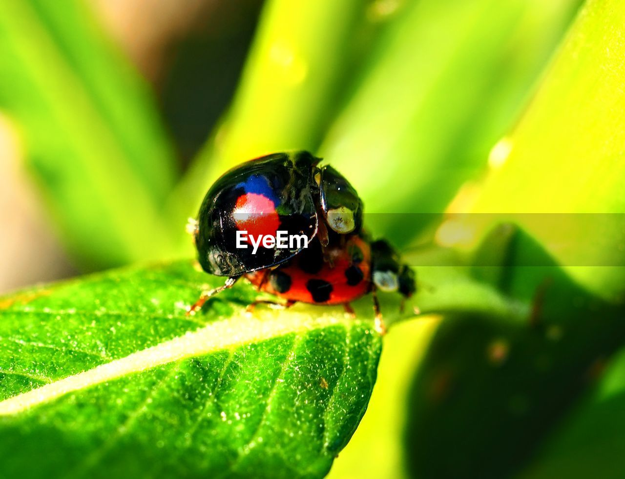 plant part, invertebrate, green color, leaf, insect, animal wildlife, animals in the wild, animal, animal themes, one animal, close-up, beetle, plant, nature, selective focus, day, no people, ladybug, beauty in nature, outdoors