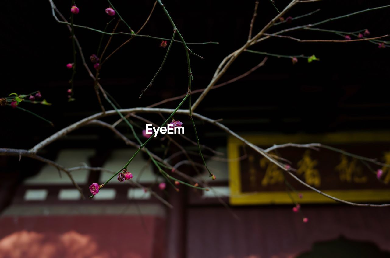 close-up, no people, illuminated, focus on foreground, selective focus, plant, night, nature, outdoors, multi colored, growth, glowing, fragility, creativity, pink color, architecture, vulnerability, beauty in nature, decoration