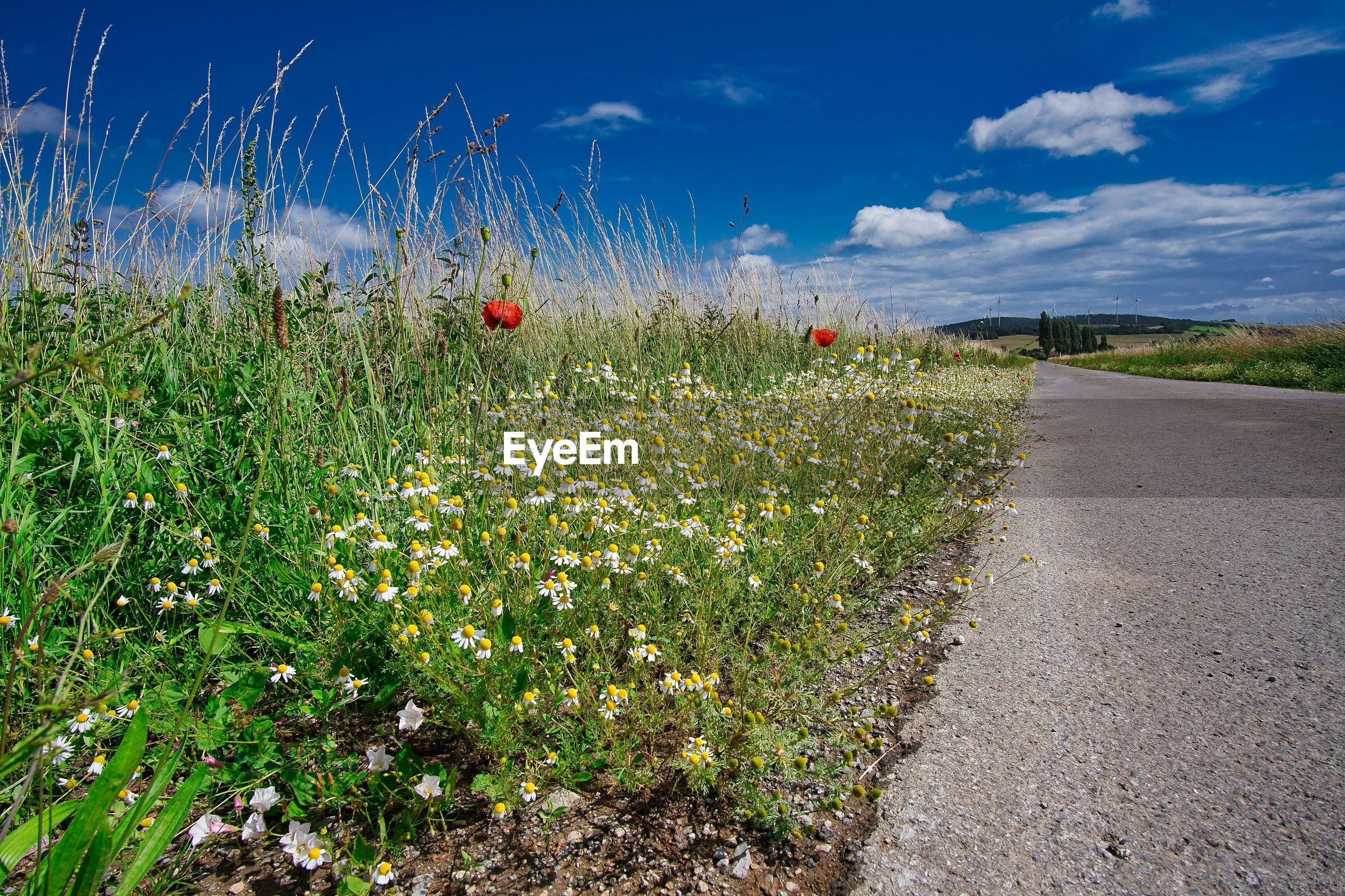 PLANTS GROWING ON FIELD BY ROAD