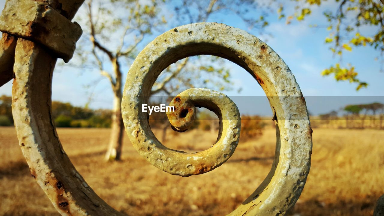 rusty, metal, focus on foreground, no people, day, nature, geometric shape, circle, plant, close-up, tree, land, shape, outdoors, field, selective focus, old, run-down, weathered, spiral, iron - metal